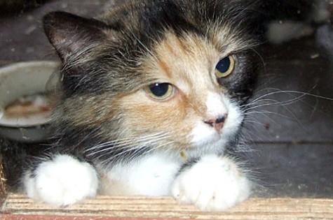 Varjupaiga kass