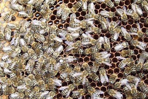 Ühes tarus võib elada üle 80 000 mesilase. Foto: Katrin Pärnpuu