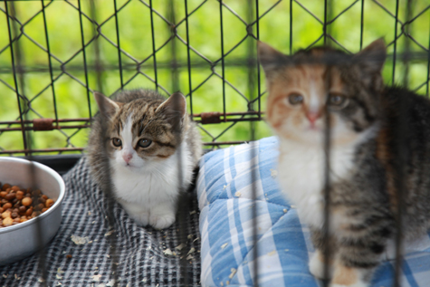 Kas viirus või nõrk immuunsüsteem, aga ellu jäävad vaid üksikud varjupaika sattunud kassipojad. Foto Arvo Tarmula