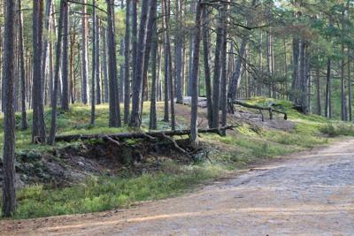 Nõva mets. Foto: Arvo Tarmula