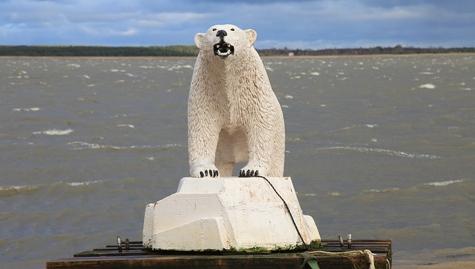 Jääkaru väljatõmbamine 2013