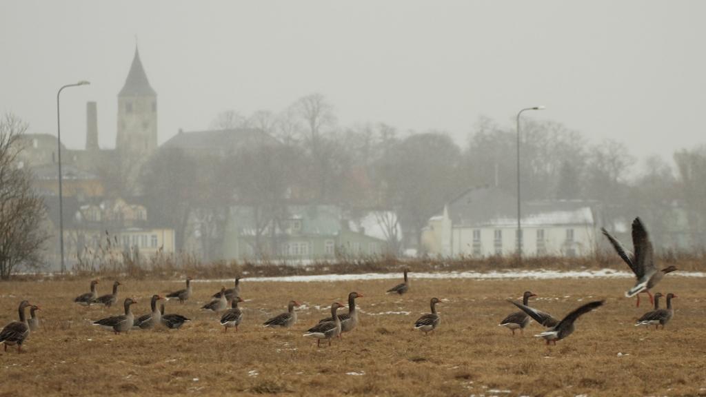 Poolteist tundi enne talve lõppu. Foto: Urmas Lauri