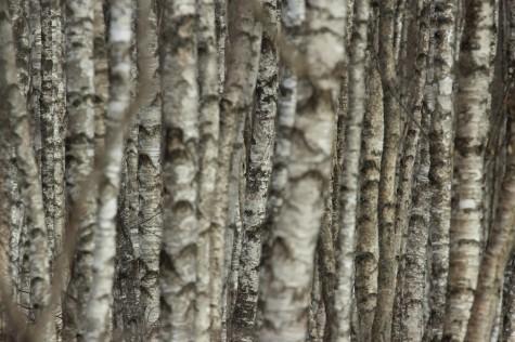 Kasemets. Foto: Urmas Lauri