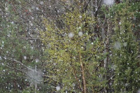Ilmateenistus lubas tänaseks lörtsi ja seda lisaks vihmale ka tuli. Foto: Urmas Lauri