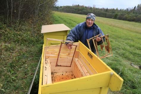 Karu rüüstatud mesitarud arvo tarmula (2)
