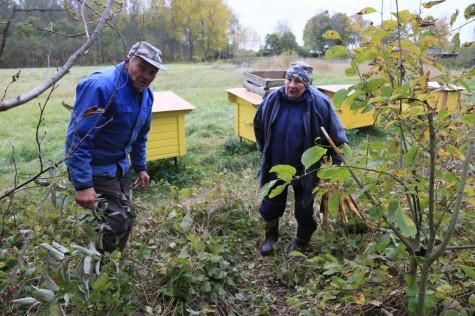 Karu rüüstatud mesitarud arvo tarmula (4)
