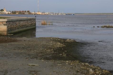 Madal meri (2) arvo tarmula