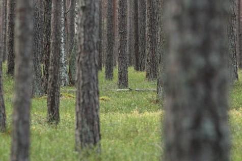 Sügisene mets (2)