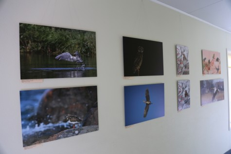 Linnurahva fotonäitus Promenaadis arvo tarmula (1)