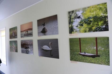 Linnurahva fotonäitus Promenaadis arvo tarmula (4)
