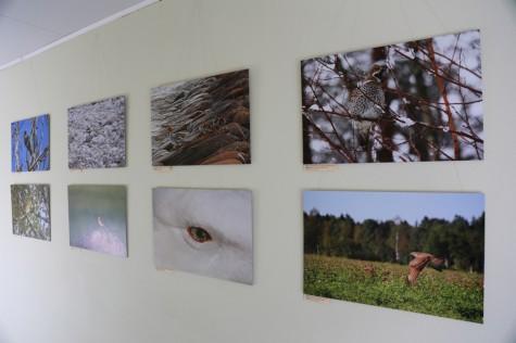 Linnurahva fotonäitus Promenaadis arvo tarmula (6)