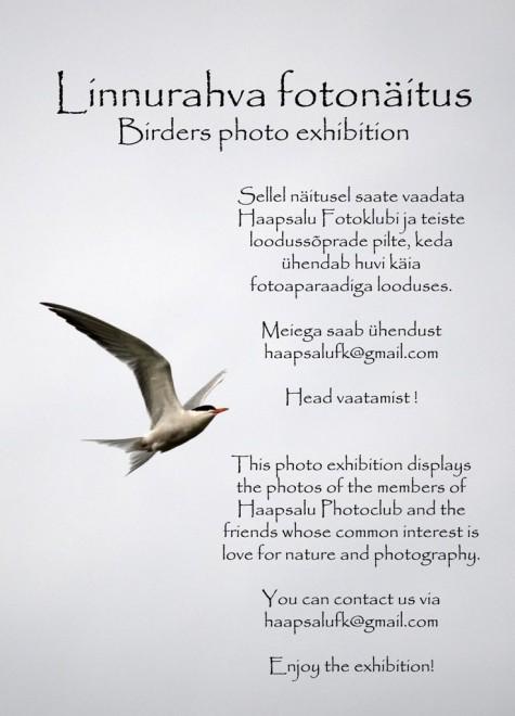 Linnurahva fotonäitus Promenaadis arvo tarmula (9)