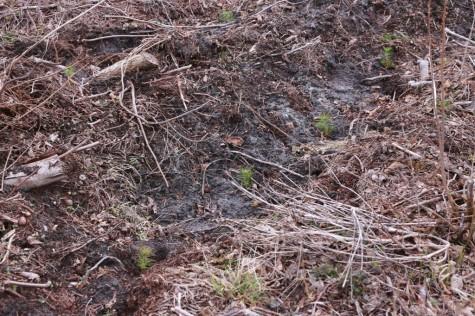 Metsaistutaja Hepner arvo tarmula (2)