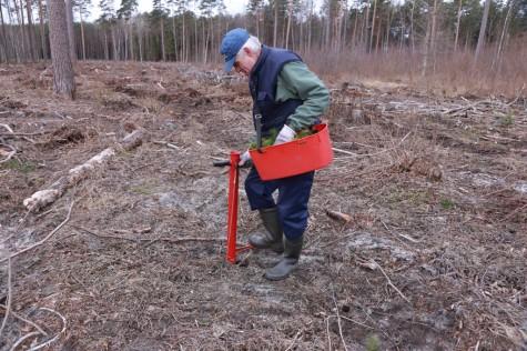 Metsaistutaja Hepner arvo tarmula (3)