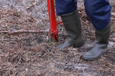 Metsaistutaja Hepner arvo tarmula (4)