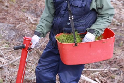 Metsaistutaja Hepner arvo tarmula (5)