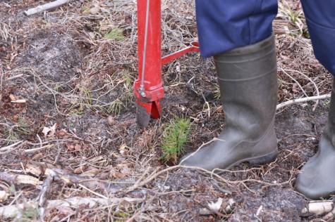 Metsaistutaja Hepner arvo tarmula (6)