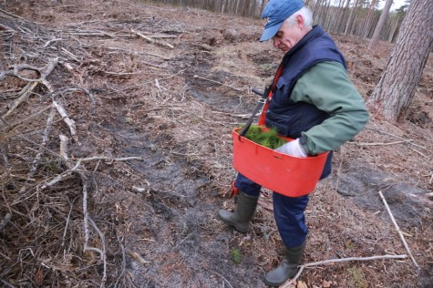 Metsaistutaja Hepner arvo tarmula (7)