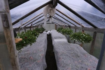 oreli lilled piir (1)