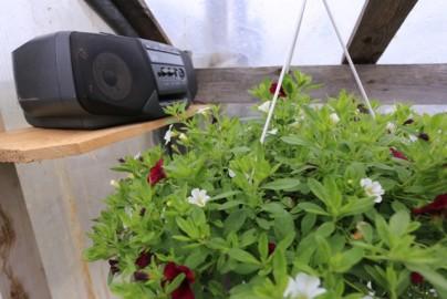 oreli lilled piir (4)