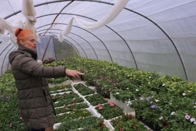 oreli lilled piir (6)