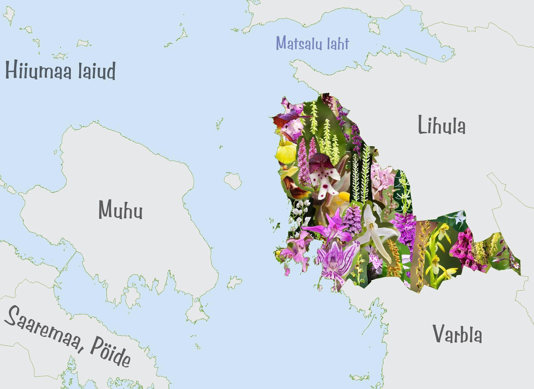 Hanila orhideed