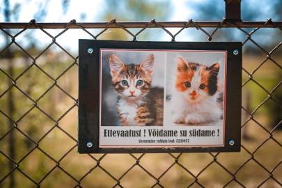 Teeme Ära loomade varjupaik (eduard laur) (26)