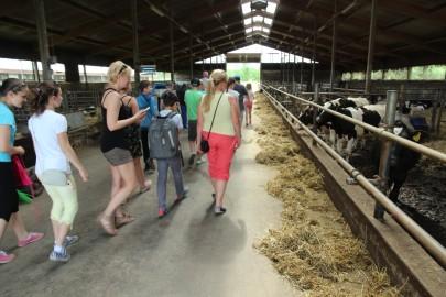 Koolilapsed Leediküla lehmalaudas 028