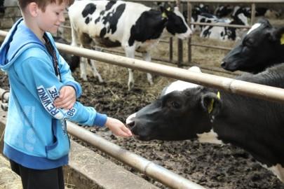 Koolilapsed Leediküla lehmalaudas 057