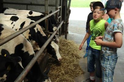 Koolilapsed Leediküla lehmalaudas 073