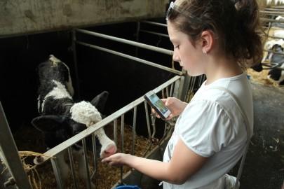 Koolilapsed Leediküla lehmalaudas 097