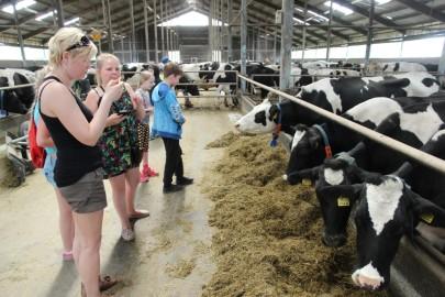 Koolilapsed Leediküla lehmalaudas 134
