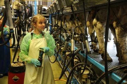 Koolilapsed Leediküla lehmalaudas 197