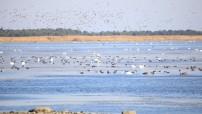 Madal vesi ja linnud Tagalahel (arvo tarmula) (17)