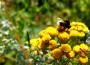 mesilane-c3b5iel-allikas-pc3b5llumajandusministeerium
