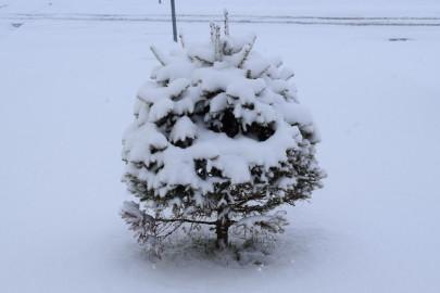 lumi_lihavotted 2