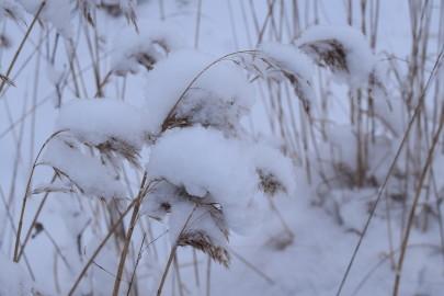 lumi_lihavotted 5