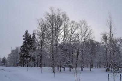 lumi_lihavotted 8