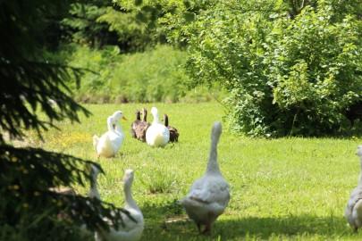 Risti linnuaed (urmas lauri) (2)