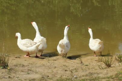 Risti linnuaed (urmas lauri) (4)