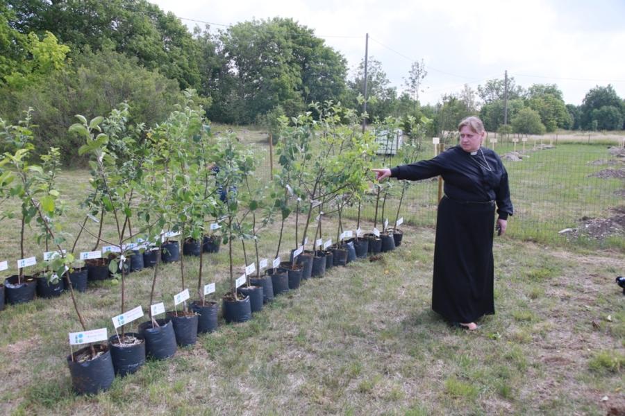 Ridala kirikuõpetaja Küllike Valk 60 õunapuuga. Foto Arvo Tarmula