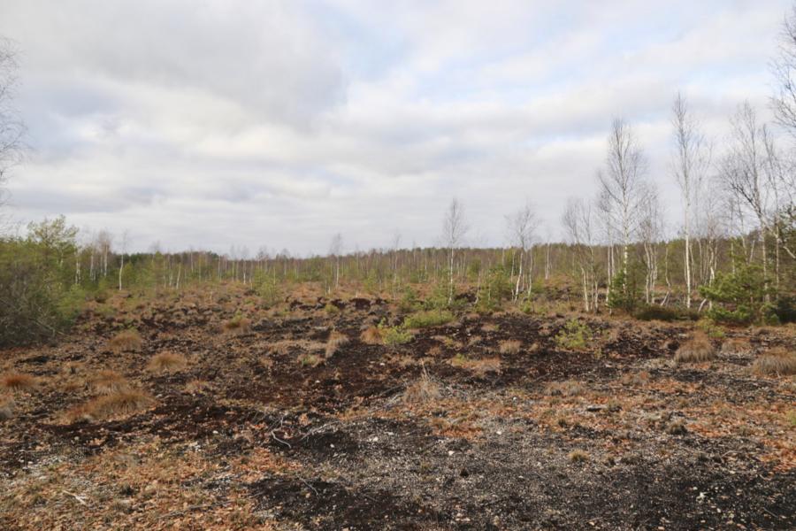 Tallinna firma loobus Turvalepa turbakaevandusest