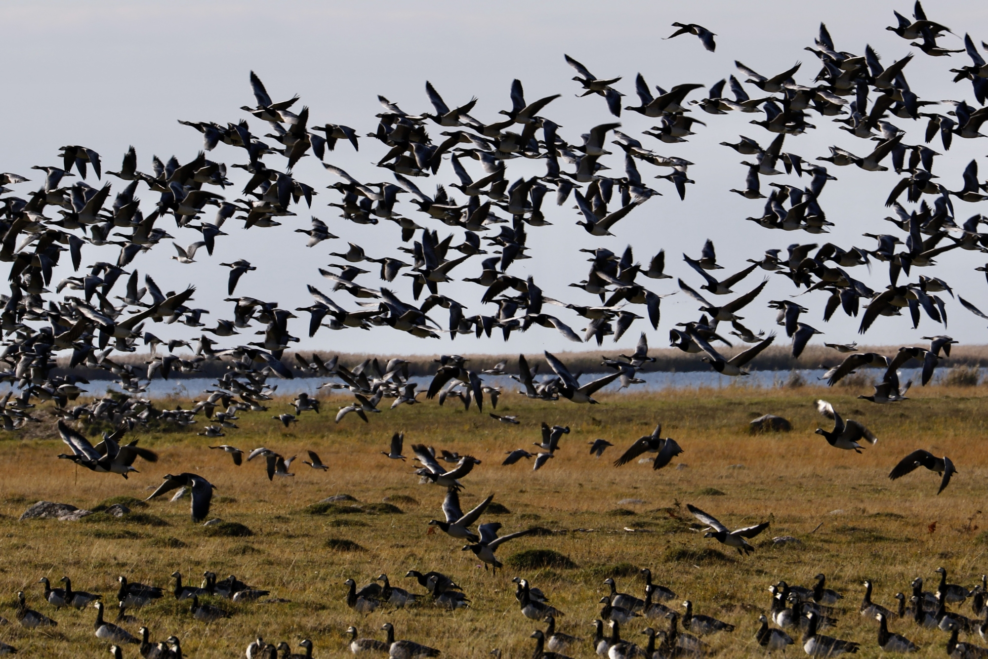 Loodusesõbrad loendasid Põõsaspeal rekordarvu linde