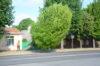 Galerii: algas Posti tänava puude langetamine (galerii täieneb jooksvalt)